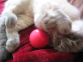 猫の鼻息(笑)_c0006826_623635.jpg