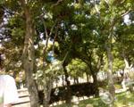 b0039734_21415997.jpg