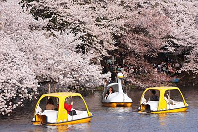 春も夕暮れ_c0030685_211945.jpg