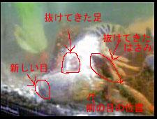 b0055807_14581636.jpg