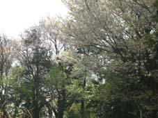 花の匂いのするキャベツが「生まれる」瞬間(4月10日)_c0014967_0452423.jpg
