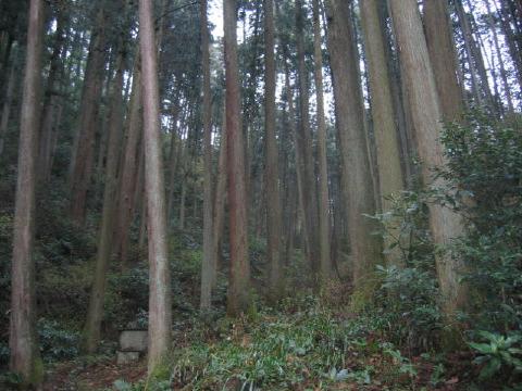 杉花粉最前線へ_c0016913_21553635.jpg