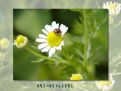 b0066985_17445066.jpg