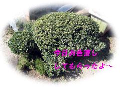 c0041997_2038383.jpg