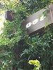 b0016416_1301526.jpg