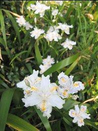 花の季節_a0019755_17211430.jpg
