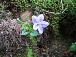 花の季節_a0019755_17214036.jpg