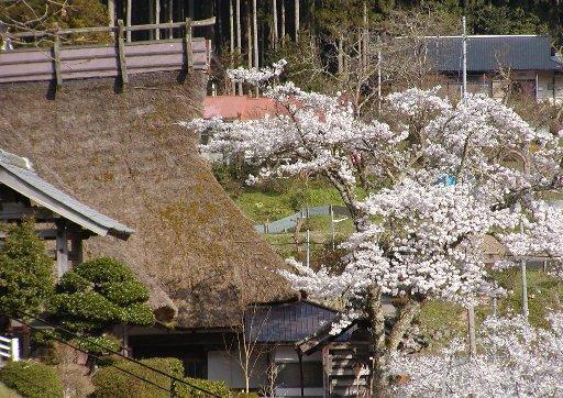 山里の春_c0057390_20334746.jpg