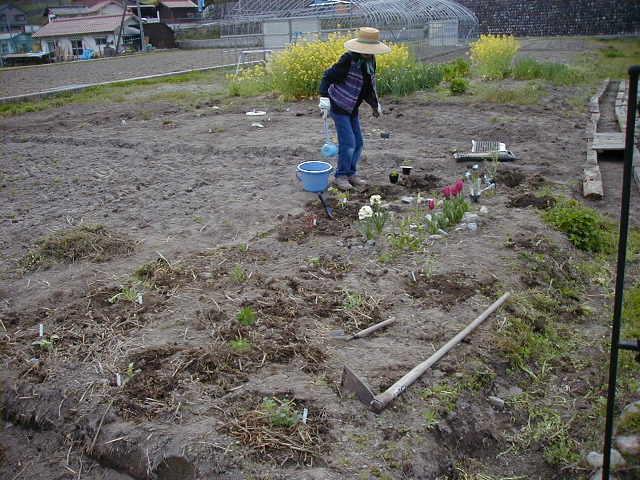 花の苗を植えた_c0060919_15461332.jpg