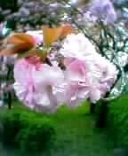b0061261_031998.jpg
