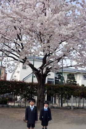 桜 咲きました。_a0018671_11554586.jpg
