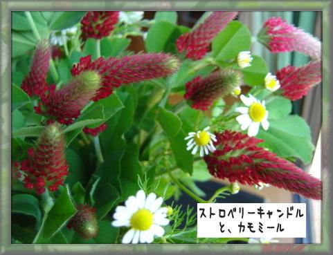 b0066985_20323344.jpg