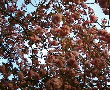 【視点と風景】2005年4月22日金…21木、KTa★brasilの観た景色_b0032617_2011542.jpg