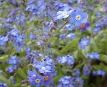 【視点と風景】2005年4月22日金…21木、KTa★brasilの観た景色_b0032617_20121558.jpg