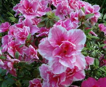 【視点と風景】2005年4月22日金…21木、KTa★brasilの観た景色_b0032617_20122517.jpg