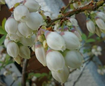 【視点と風景】2005年4月22日金…21木、KTa★brasilの観た景色_b0032617_2012436.jpg