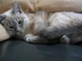 猫好きセンサ搭載型_c0006826_639205.jpg