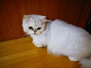 名古屋の猫達_c0019551_13561858.jpg