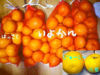 b0048649_1054335.jpg