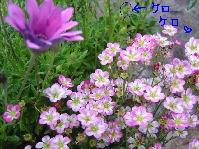 c0003596_2013687.jpg