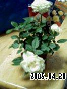b0026467_7174897.jpg
