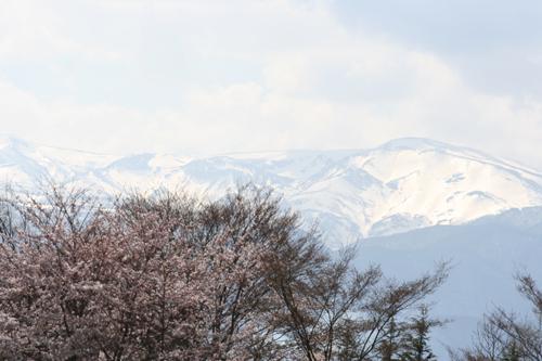 春・百花繚乱 その1_a0018671_3205815.jpg