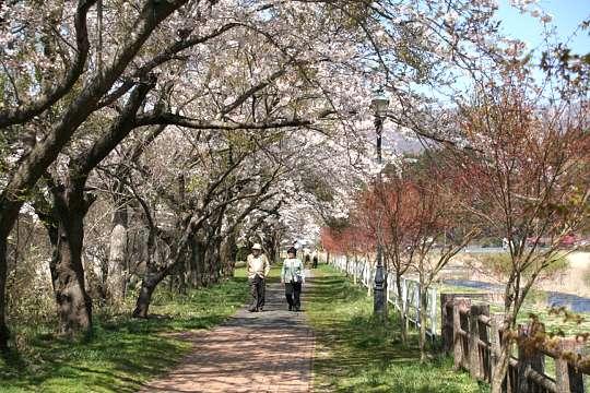 桜前線 更に北上中_d0012134_23541484.jpg