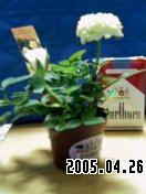 b0026467_422535.jpg