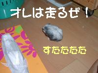 b0016983_1819438.jpg