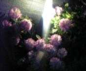 b0036797_242369.jpg