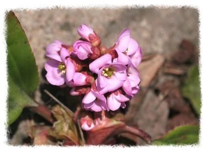 花だより_d0012134_16493511.jpg