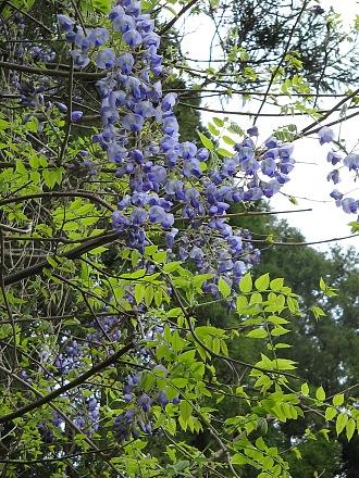 春を愛でる・・・芽ぶきと春の花_c0001578_22591521.jpg