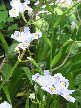 春を愛でる・・・芽ぶきと春の花_c0001578_2311375.jpg