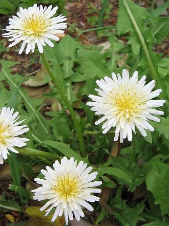 春を愛でる・・・芽ぶきと春の花_c0001578_2314081.jpg