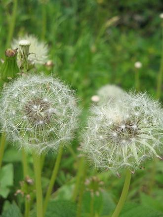 春を愛でる・・・芽ぶきと春の花_c0001578_2315876.jpg
