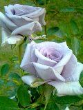 c0046316_21464358.jpg