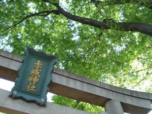 春を飛び越し夏の様相【赤城神社】_a0006744_11301256.jpg