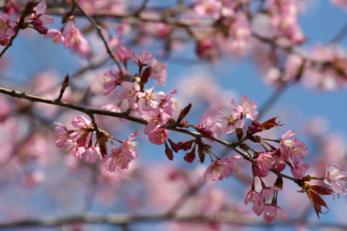 春・百花繚乱 その2_a0018671_0411911.jpg