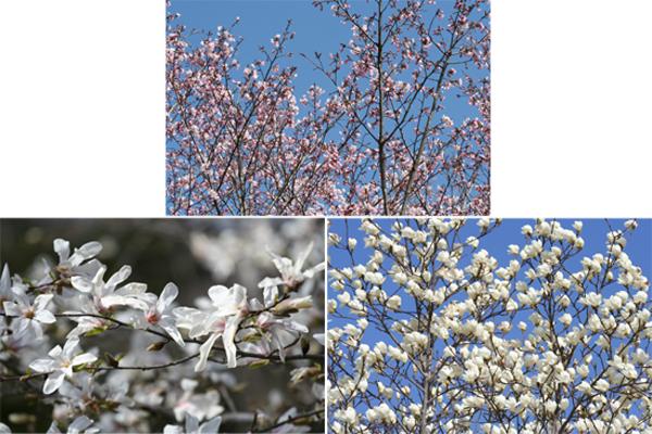 春・百花繚乱 その2_a0018671_0423082.jpg