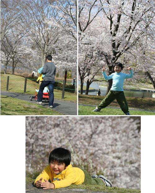 春・百花繚乱 その2_a0018671_052183.jpg