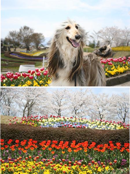 春・百花繚乱 その3(モデル:エリー)_a0018671_23285014.jpg