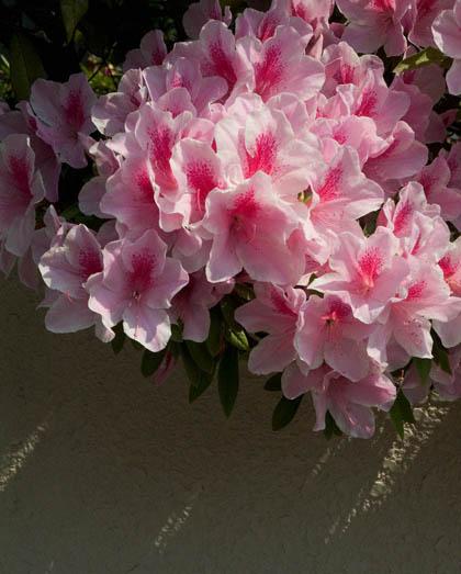 春が終わる_c0002682_10293483.jpg