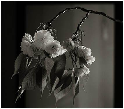 今日の花と葉_c0002682_22335714.jpg