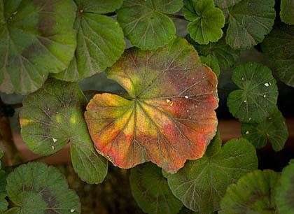 今日の花と葉_c0002682_2235695.jpg