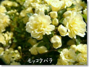 b0066985_13463361.jpg