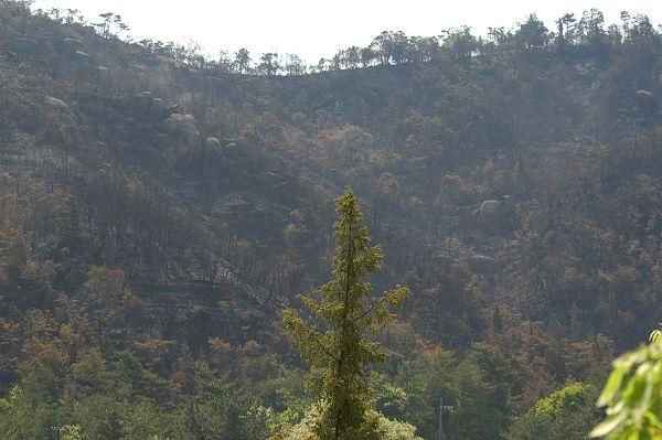 深山が燃えた_b0021897_14101334.jpg