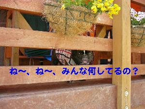 b0026701_1956511.jpg