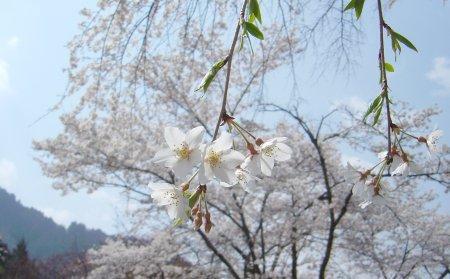 春色の下で_c0001631_22234777.jpg