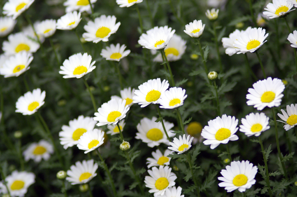 Flower In The Sun ♪ by Janis Joplin_c0057800_1815744.jpg