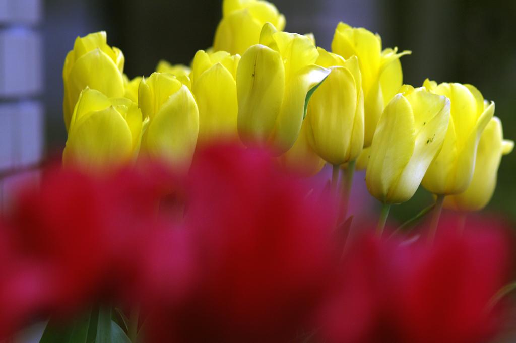 Flower In The Sun ♪ by Janis Joplin_c0057800_18473276.jpg